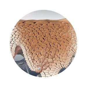 Minh họa về sự bảo vệ của da khỏi tia UV