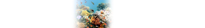 Riffgesetz zum Korallenschutz
